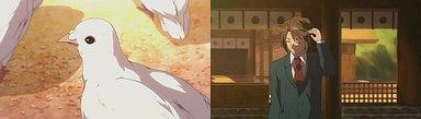 広田神社の鳩が白い鳩に